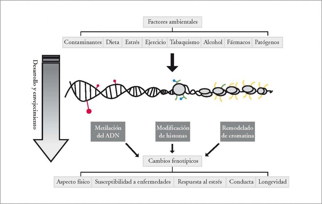 marcas-epigeneticas