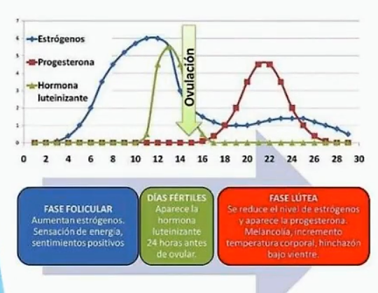 Ciclo mesntrual. variables 2
